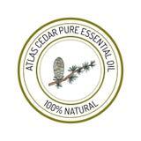 Atlas cedar, essential oil label, aromatic plant Stock Images