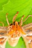 Atlas-Motte stockbilder