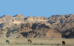 Atlas mountains royalty free stock images