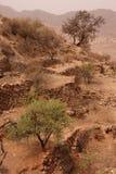 Atlas mountains. Argan trees in the Atlas mountains, Morocco stock image