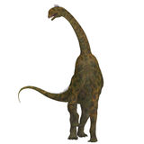Atlasaurus on White. Atlasaurus was a large herbivorous dinosaur that lived in the Jurassic Period of Morocco, North Africa Royalty Free Stock Photography
