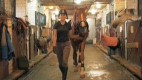 Atleta chodzi z koniem przez stajenki Istota ludzka i zwierzęcy miłości pojęcie zbiory wideo