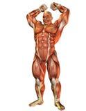 Atleta com Pose da força de músculo Foto de Stock