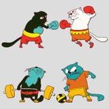 Atletas dos gatos no desgaste dos esportes Foto de Stock Royalty Free