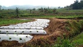 Atmósfera agrícola El cultivar un huerto con métodos naturales metrajes