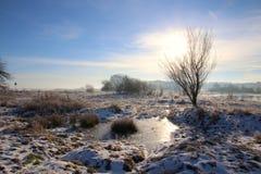 Atmósfera de la mañana en el prado revestido de la nieve imagenes de archivo
