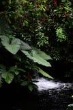 Atmósfera de la selva tropical foto de archivo libre de regalías