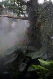 Atmósfera de la selva tropical fotografía de archivo