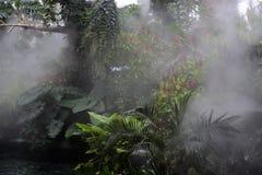 Atmósfera de la selva tropical fotos de archivo