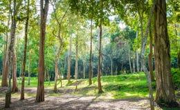 Atmósfera del bosque fotografía de archivo libre de regalías