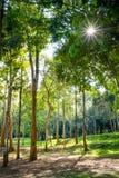 Atmósfera del bosque foto de archivo libre de regalías