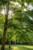 Atmósfera del bosque imagenes de archivo