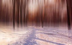 Atmósfera del bosque del invierno Imágenes de archivo libres de regalías
