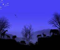 Atmósfera nocturna africana Foto de archivo libre de regalías