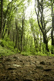 Atmen Sie wandernd im Wald tief ein Lizenzfreies Stockbild
