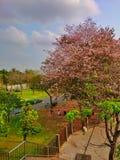 Atmesphere Japan i bangkok Royaltyfria Bilder