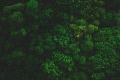 Atmosfäriska Moss Background Texture royaltyfria bilder