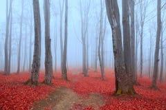 Atmosfera azul em uma floresta nevoenta com folhas vermelhas Fotografia de Stock Royalty Free
