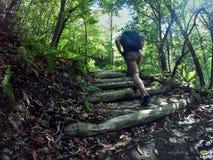Atmosfera della foresta immagine stock