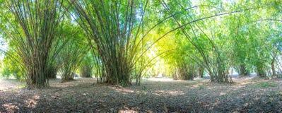 Atmosfera do verão na floresta de bambu foto de stock royalty free