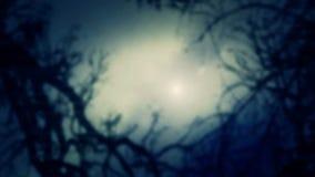 Atmosfera enevoada Forest Trees através de uma névoa ilustração stock