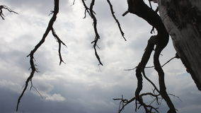 Atmosfera mistica di favola Cielo nuvoloso con un albero morto dei morti La macchina fotografica si muove sul cursore L'albero è  archivi video