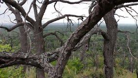 atmosfera mistyczna Krzywy są nieżywymi drzewami Gałąź przeplatają Las umiera jako rezultat życia ludzkiego Globalny klimat zdjęcie wideo