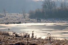 Atmosfera przy jeziorem zimny ranek Zdjęcia Royalty Free