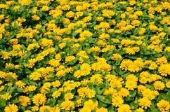 Atmosfera w ogródzie Obraz Royalty Free