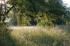 Atmosferische veevoederweide onder bomen Stock Fotografie