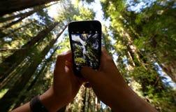 atmosfery ciemni mgliści fotografii drzewa Zdjęcie Stock