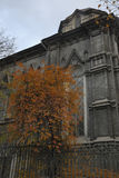 Atmosperic autumn tree. With old synagogue Stock Photos