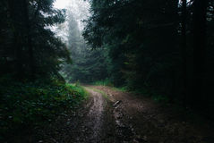 Atmosperic road across the forest. Atmospheric road across the forest in Ukrainian Carpathians Royalty Free Stock Image