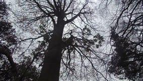 Atmosphärische Bäume und Wind nr Crookham, Northumberland Großbritannien stock footage