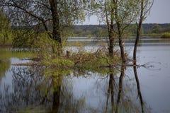 Atmosphärische Reflexion des Weidenbaums herein über überschwemmtem rever im Frühjahr Europa-Überschwemmungsgebiet Lizenzfreies Stockbild