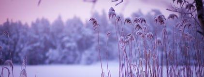 Atmosphärische Winterschneelandschaft mit purpurroten Tönen stockfotos