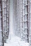 Atmosphärischer, magischer Weihnachtswinterwald voll des weißen Schnees stockfoto