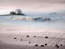 Atmosphärisches gefrorenes Grasland lizenzfreies stockbild