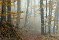 Atmosphère of haze Stock Image