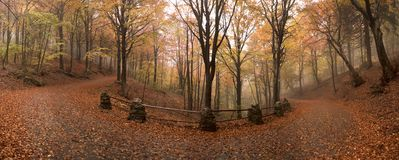 Atmosphere and colors of autumn. The leaves fall in the misty forest in autumn stock images