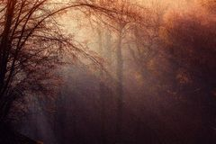 Atmosphere, Forest, Morning, Sunlight Royalty Free Stock Photos