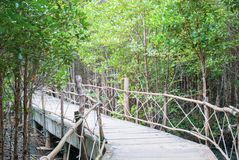 The atmosphere in mangrove forest when mud is so black after raining with wooden plus concrete walk bridge, eco nature tourism, f. Resh moment stock photo