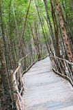 The atmosphere in mangrove forest when mud is so black after raining with wooden plus concrete walk bridge, eco nature tourism stock image
