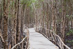 The atmosphere in mangrove forest when mud is so black after raining with wooden plus concrete walk bridge, eco nature tourism royalty free stock photo