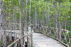 The atmosphere in mangrove forest when mud is so black after raining with wooden plus concrete walk bridge, eco nature tourism, p. Ath to goal stock images