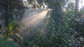 The atmosphere of the morning sunshine among trees in a beautiful tropical forest. Tropical forest stock photography