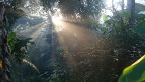 The atmosphere of the morning sunshine among trees in a beautiful tropical forest. Tropical forest stock images