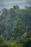 The atmosphere in the morning of a tropical rainforest landscape Royalty Free Stock Image