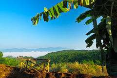 Atmosphere on morning with view of plentiful bamboo forest Royalty Free Stock Photography