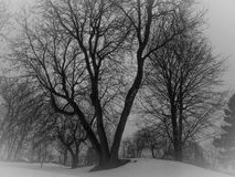 Atmosphere. Yesterday there was mist and the trees with their branches stand out on the whiteness. It creates an atmosphere Stock Photos